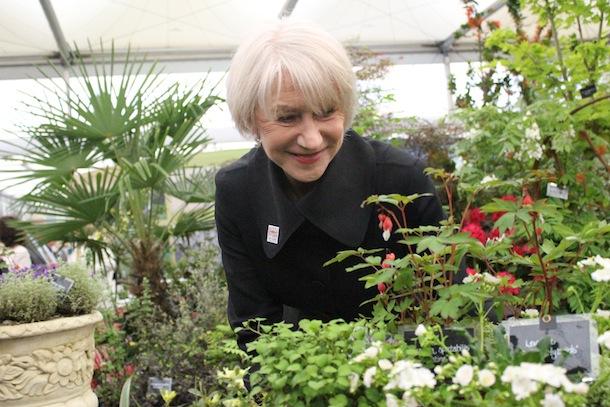 Dame Helen Mirren  - Chelsea Flower Show 2013
