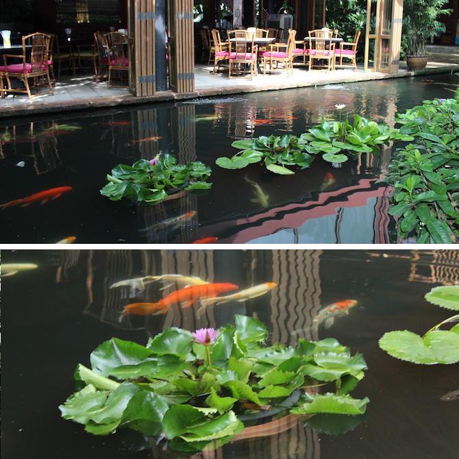 Koi Pond - Jim Thompson House